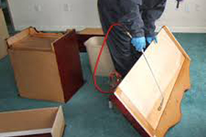 Bed Bug Extermination London
