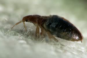 Bed Bug Extermination St. Catharines