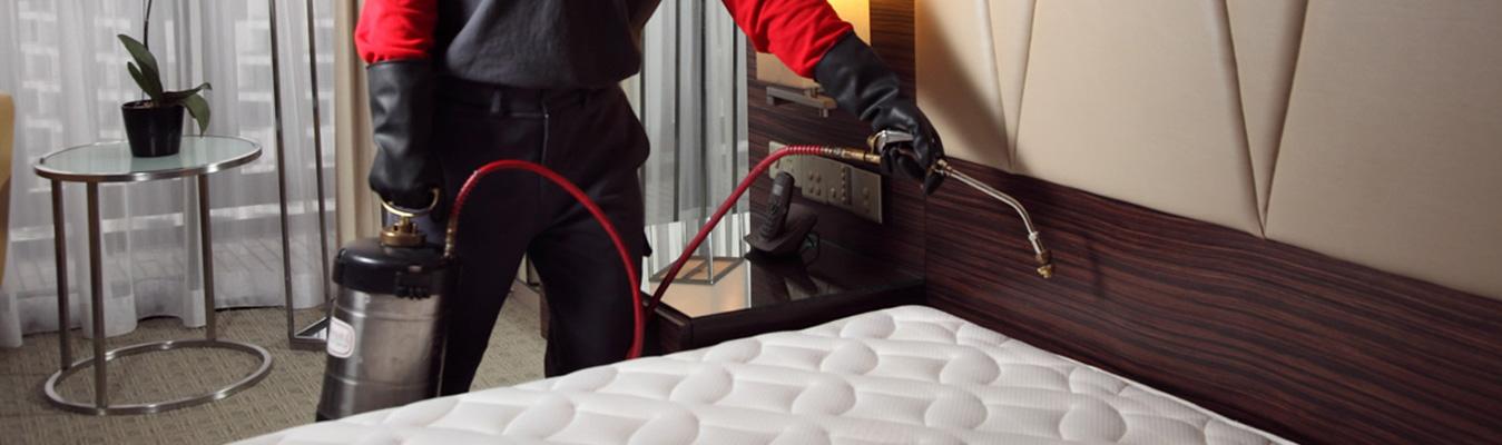 Bed Bug Exterminator Canada