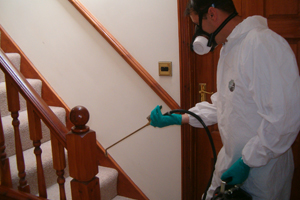 Bed Bug Extermination Abbotsford