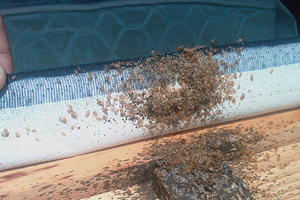 Bed Bug Extermination Services Thunder Bay Ontario 911 Bed Bugs