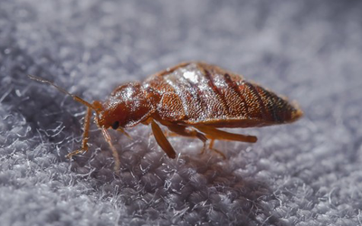 Myth Busting: What You Actually Need To Know About Bed Bugs