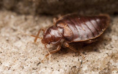 3 Smart Tips To Get Rid Of Bed Bugs Faster